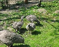 Kapopdzioby-27-04-11